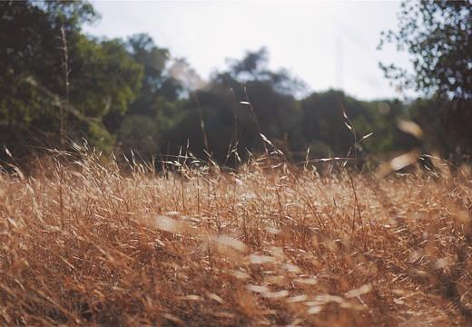 Kiedy kończy się alergia na pyłki traw?