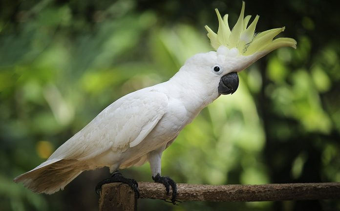 uczulenie-na-papugi