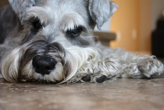 Alergia na sierść psa – jak ją rozpoznać?