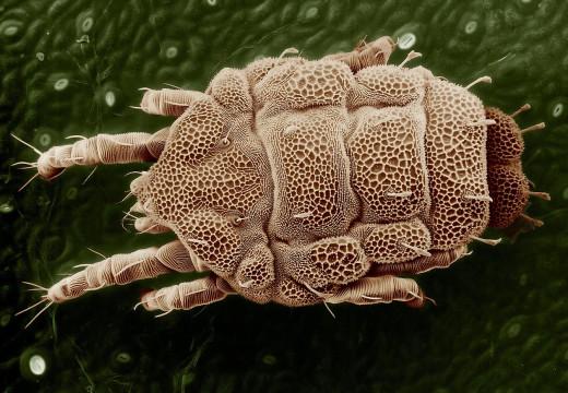 Alergia na kurz – jak pozbyć się alergenów z mieszkania?
