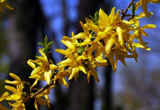 Alergeny wziewne na wiosnę