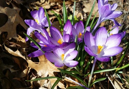 Alergik gotowy na wiosnę
