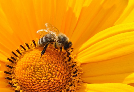 Wstrząs anafilaktyczny po ukąszeniu pszczoły