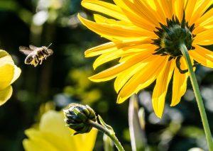 ukąszenie przez pszczołę