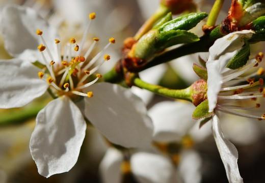 Pyłkowice i ich leczenie