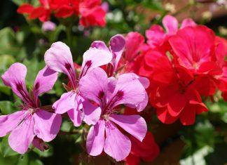 alergia na kwiaty