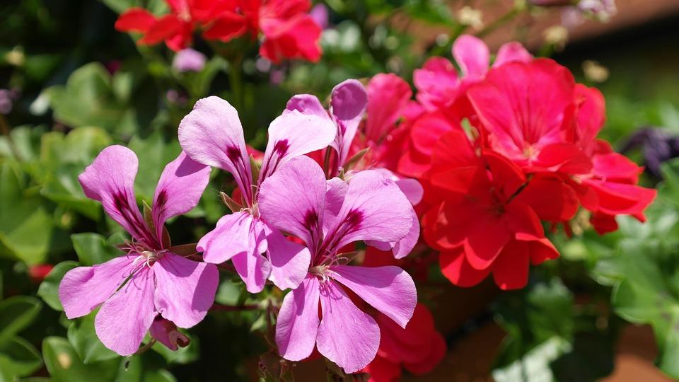 Alergia Na Kwiaty Moje Alergie Serwis Dla Alergikow