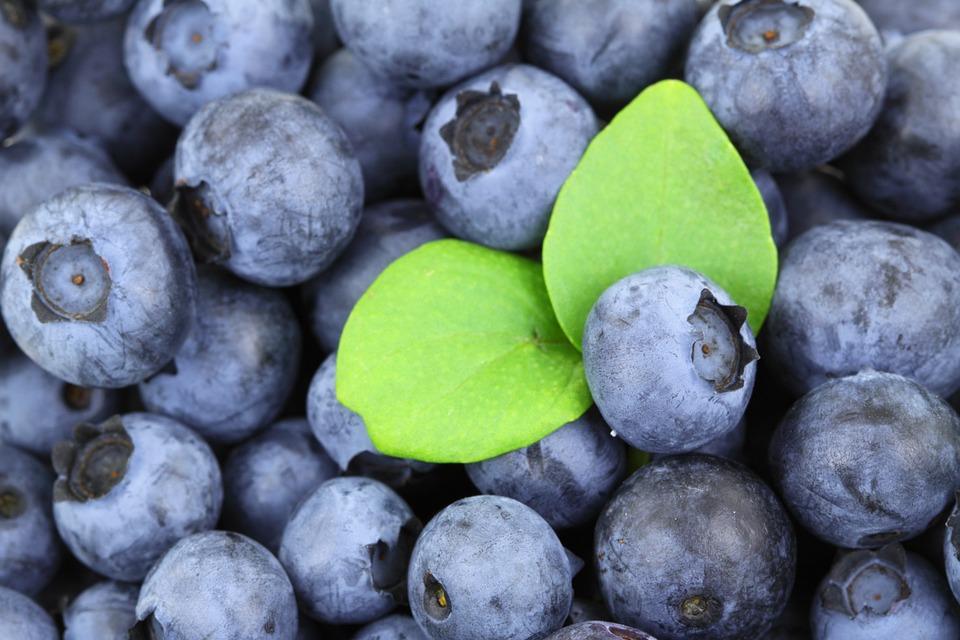 alergia na jagody