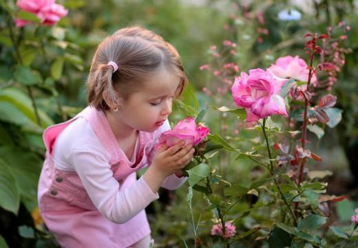 Alergia na róże – czy wszystkie gatunki uczulają?
