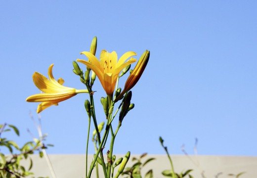 Alergia na letnie kwiaty
