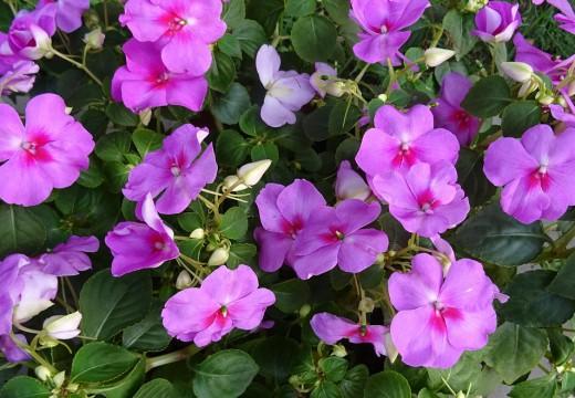 Letni ogród alergika