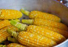 alergia na kukurydzę