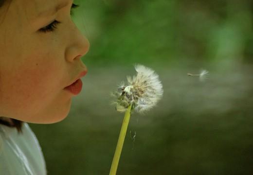 Jakie bodźce uruchamiają zjawiska alergiczne?