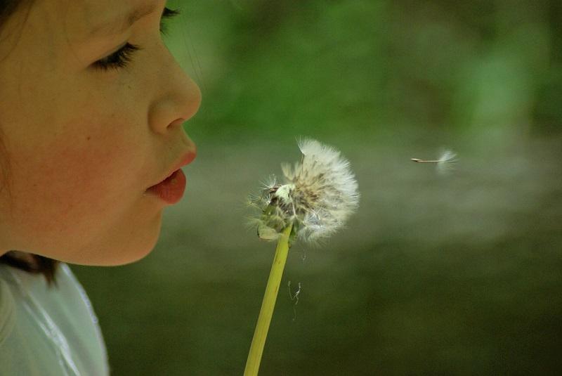 zjawiska alergiczne