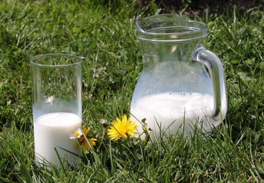 Alergeny w mleku krowim – dlaczego mleko uczula?