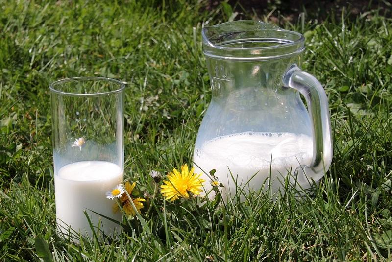 dlaczego mleko uczula