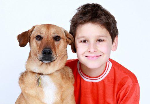 Alergia na psa – jak wybrać rasę dla małego alergika?