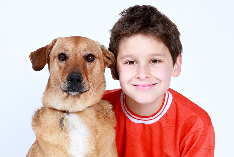 alergia na psa