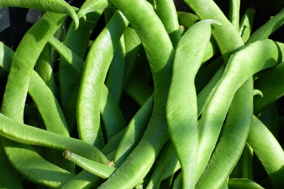 rośliny strączkowe
