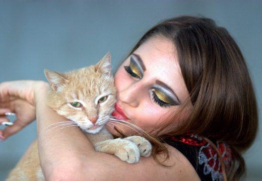 Alergia na kota – czy wszystkie mruczki uczulają tak samo?