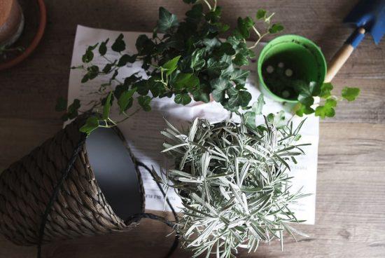 Rośliny, które chronią przed smogiem