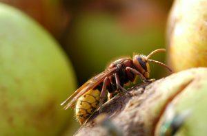 alergia na jad owadów