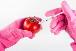 Alergie pokarmowe a żywność GMO