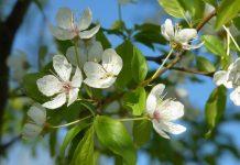 wiosenne objawy alergii