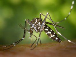 żel po ukąszeniu komarów