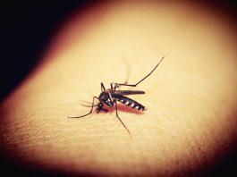 jak odstraszyć komary