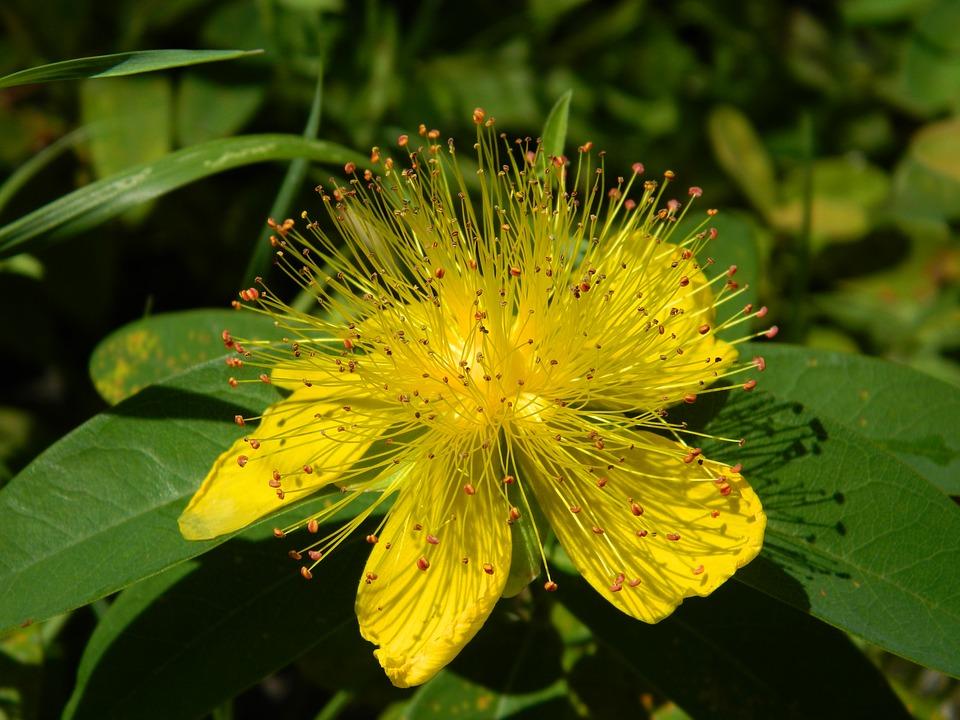 roślina