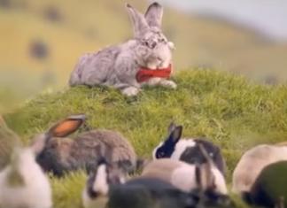 mnóżmy się jak króliki