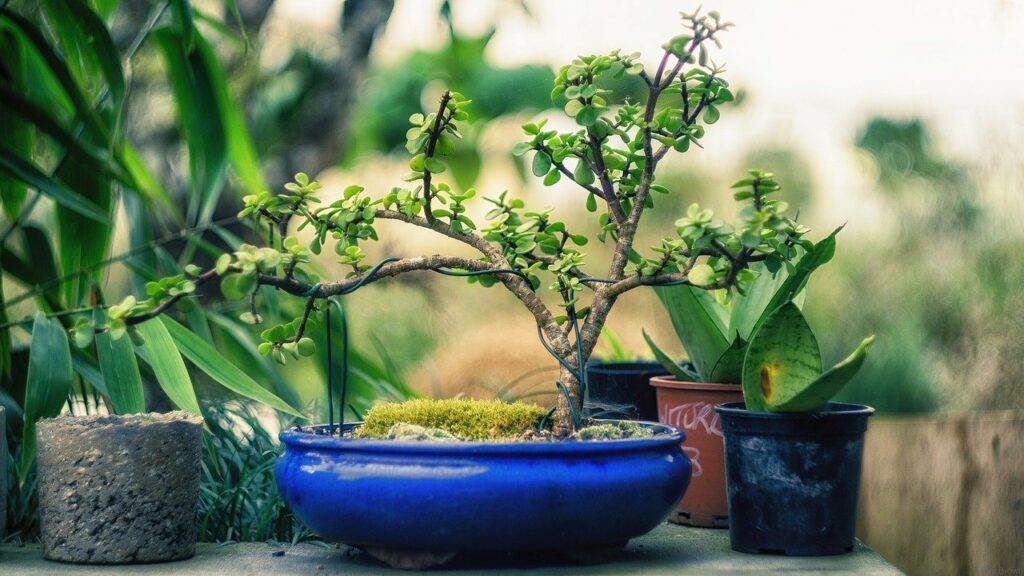 Aranżacja ogrodu przydomowego w stylu rustykalnym