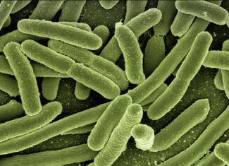 Narastanie antybiotykooporności