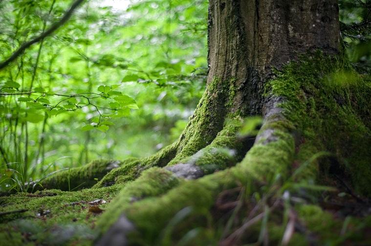 seks w lesie