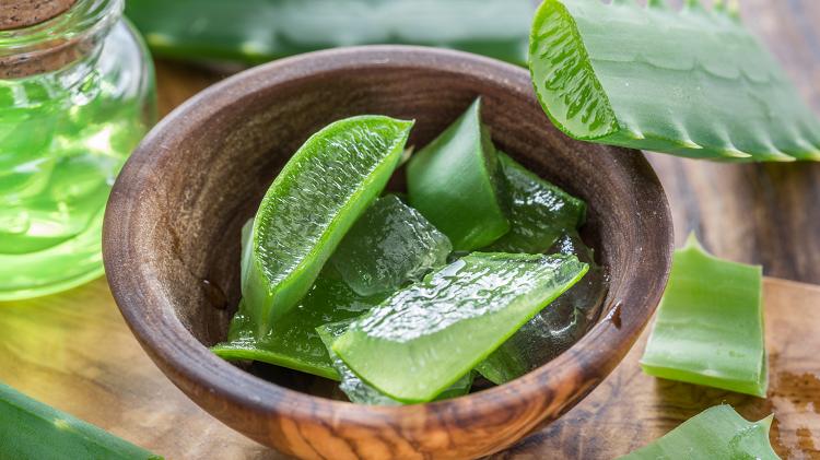 Roślina aloesu i jej zastosowanie w kosmetyce