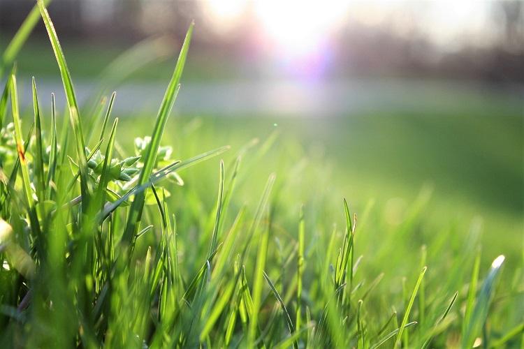 Czy koszenie trawy szkodzi alergikom