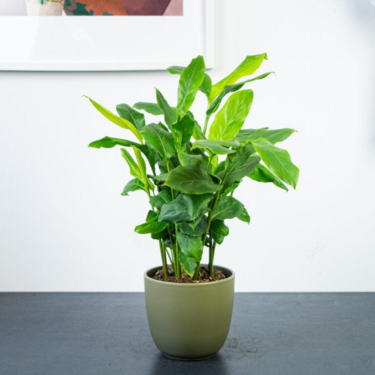Obecność roślin a nasze samopoczucie