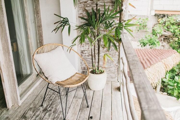 dlaczego warto mieć w domu rośliny